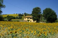 Paisagem perto dos marços de Corinaldo, Itália do verão Imagem de Stock Royalty Free
