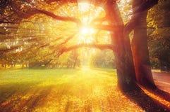 Paisagem pitoresca da queda As árvores da queda com folha amarelada no parque ensolarado de outubro iluminaram-se pela luz do sol imagens de stock royalty free