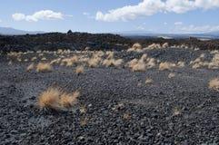 Paisagem preta da lava com grama, Kona, Havaí Fotos de Stock Royalty Free