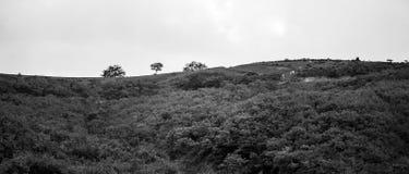 Paisagem preto e branco da montanha Foto de Stock