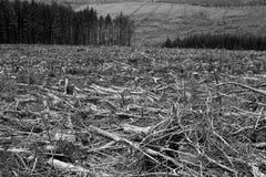 Paisagem preto e branco das florestas imagem de stock royalty free