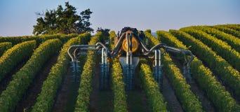 Paisagem-pulverização do vinhedo do sul do vinha-vinhedo a oeste de Imagens de Stock Royalty Free