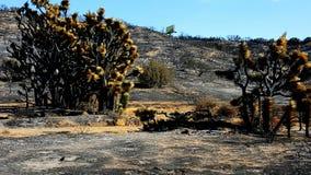 Paisagem queimada do deserto do fogo do corte do azul Fotografia de Stock
