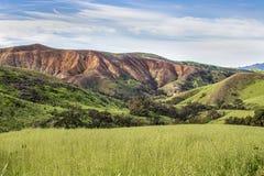Paisagem queimada que mostra o crescimento novo verde-claro em Califórnia imagens de stock royalty free