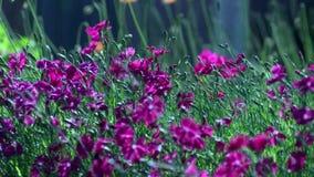 Paisagem roxa das flores vídeos de arquivo