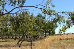 Paisagem rural australiana fotos de stock royalty free