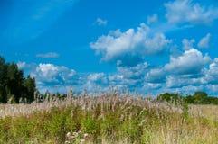 Paisagem rural bonita Foto de Stock Royalty Free