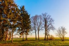 Paisagem rural com as árvores no por do sol fotos de stock royalty free
