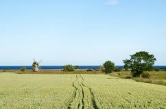 Paisagem rural com campo do moinho de vento e de milho Foto de Stock Royalty Free