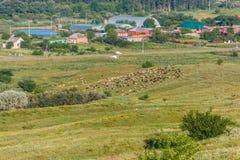 Paisagem rural com carneiros Imagem de Stock