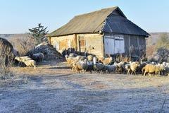 Paisagem rural com carneiros e a casa na queda foto de stock