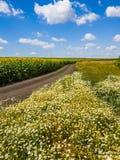 Paisagem rural com flores, estrada e campo com girassol, Rússia foto de stock