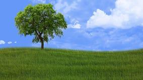 Paisagem rural com grama e árvore Imagem de Stock Royalty Free