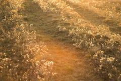 Paisagem rural com nascer do sol e estrada campo e por do sol do verão da vista bonita foto tonificada retro do sepia fuga do po fotografia de stock