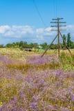 Paisagem rural com o paniculata de florescência do Gypsophila Fotografia de Stock Royalty Free