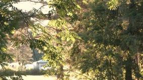 Paisagem rural com uma casa, uma cerca e uma natureza filme