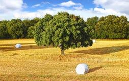 Paisagem rural da natureza pitoresca com campos Imagens de Stock Royalty Free