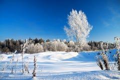 Paisagem rural do inverno com o céu azul e a madeira imagem de stock