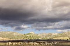 Paisagem rural do outono: Alta Murgia National Park, Itália Campo montanhoso dominado por nuvens: rebanho dos carneiros que pasta fotografia de stock