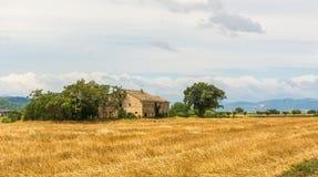 Paisagem rural do verão com campos do girassol e campos verde-oliva perto de Porto Recanati na região de Marche, Itália fotos de stock