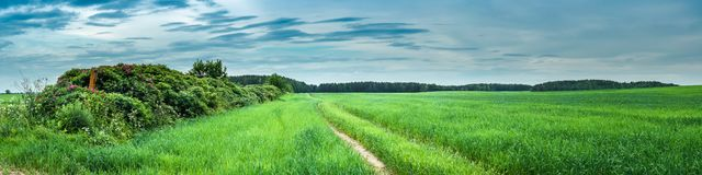 Paisagem rural do verão vista panorâmica de um campo agrícola verde com um arbusto ao longo de uma estrada de terra fotografia de stock