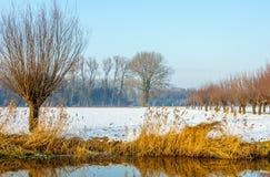 Paisagem rural em um dia ensolarado no inverno Foto de Stock Royalty Free