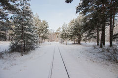 Paisagem rural Estrada de ferro do inverno através dos pinhos nevado Foto de Stock