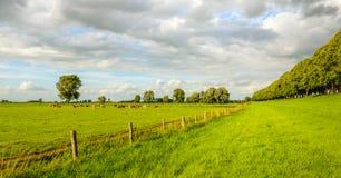 Paisagem rural holandesa pitoresca na temporada de verão Fotografia de Stock Royalty Free