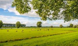 Paisagem rural holandesa pitoresca na temporada de verão Imagens de Stock