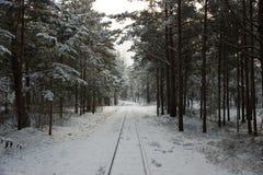Paisagem rural letão Estrada de ferro do inverno através dos pinhos nevado Fotografia de Stock Royalty Free