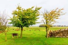 Paisagem rural no Lieper Winkel, Usedom, Alemanha fotografia de stock