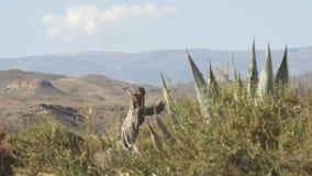 Paisagem só do deserto no meio das montanhas video estoque