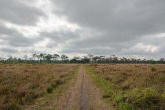 Paisagem seca do savana no dia nebuloso Fotografia de Stock
