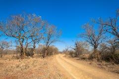 Paisagem seca dos animais selvagens de Bush das árvores da estrada de terra Fotografia de Stock