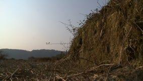 Paisagem seca e exposta da floresta, Myanmar filme