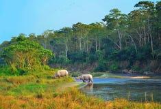 Paisagem selvagem com os rinocerontes asiáticos em CHITWAN Fotos de Stock Royalty Free