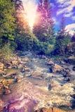 Paisagem selvagem do rio da floresta Imagem de Stock