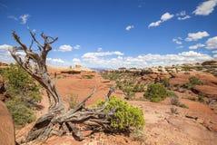 Paisagem selvagem no parque nacional de Canyonlands Imagens de Stock