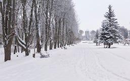 Paisagem Snow-covered no parque. Imagens de Stock