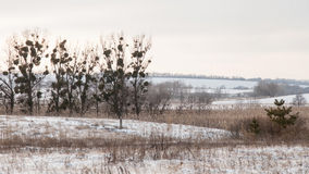 Paisagem sombrio do inverno Fotografia de Stock Royalty Free