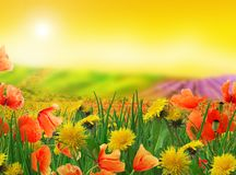 Paisagem sonhadora - campos e prados Fotografia de Stock Royalty Free