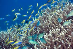 Paisagem subaquática Foto de Stock