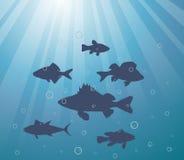 Paisagem subaquática Imagens de Stock Royalty Free