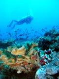 Paisagem subaquática Fotografia de Stock Royalty Free