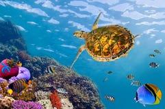 Paisagem subaquática com pares de Butterflyfishes e de tartaruga Foto de Stock