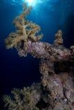 Paisagem subaquática: Corais Fotos de Stock