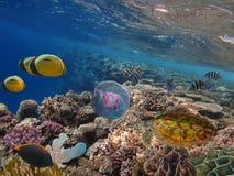 Paisagem subaquática da vida Foto de Stock Royalty Free