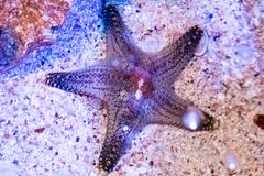 Paisagem subaquática do mundo, recife de corais colorido com peixes da estrela imagens de stock