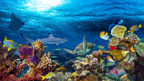 Paisagem subaquática do recife de corais Foto de Stock Royalty Free