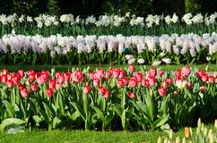 Paisagem surpreendente com as camas de flor e testes padrões de flor coloridos Foto de Stock